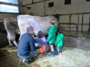 Beim Melken darf mitgeholfen werden